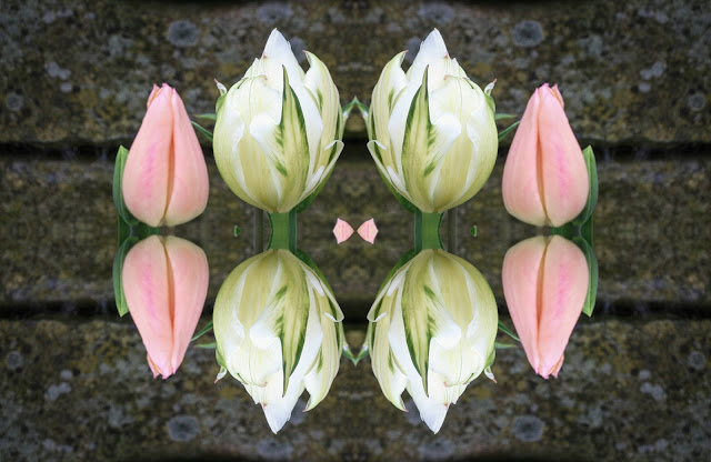 Springtime Tulips, design, background, abstract, reflection