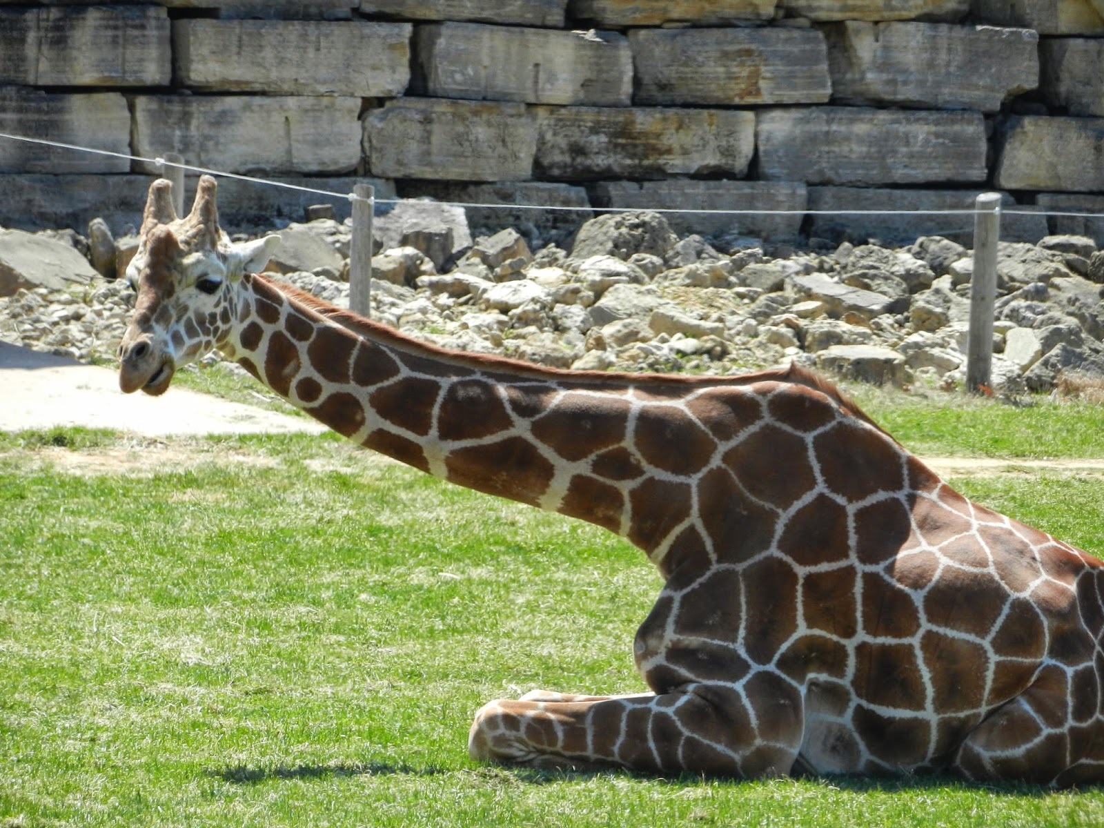 Niabi Zoo Quad Cities