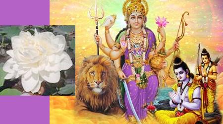 जबलपुर में खिल रहे चमत्कारी सहस्त्रदल कमल की कथा