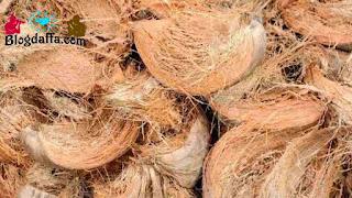 Sabut kelapa dapat digunakan sebagai pupuk organik