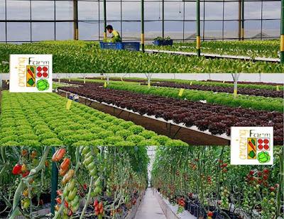 Pengertian Agroindustri dan Ruang Lingkupnya
