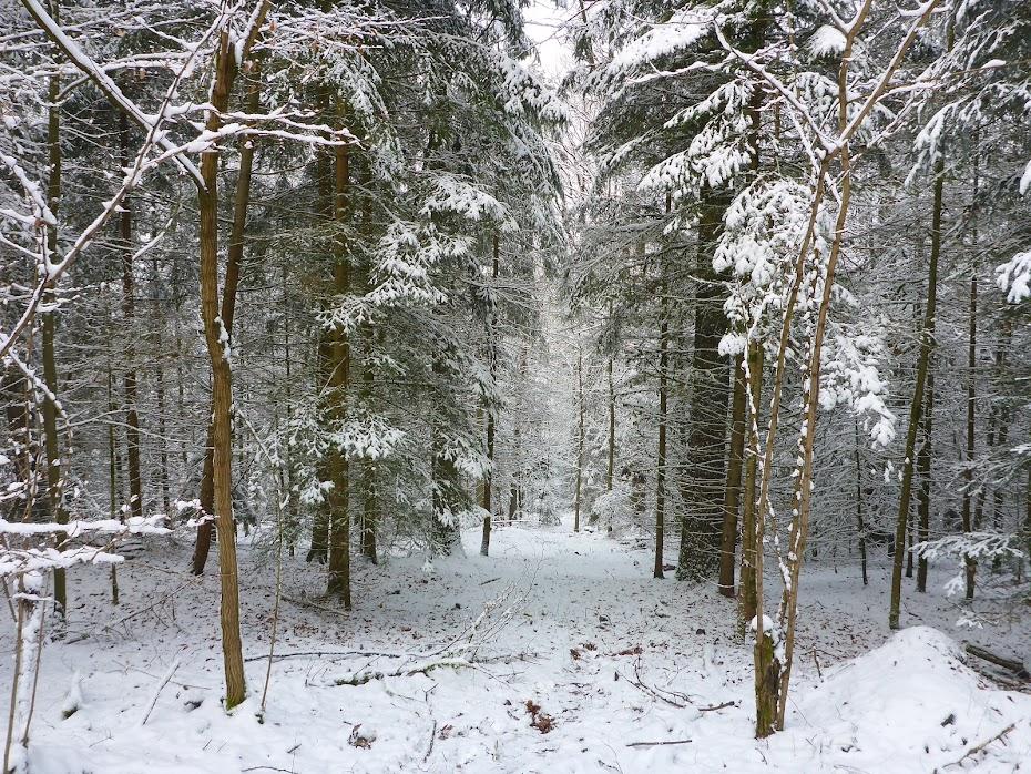 Лес зима, снег