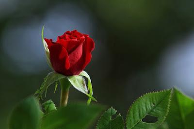 उस्ताद शायरों द्वारा लिखी गई Classic Love Shayari in Hindi