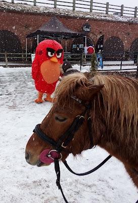 Mutte-poni ja Angry Bird Bastionissa
