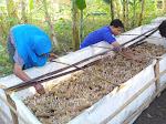 Budidaya Jamur Janggel, Cara Suswadi Hidupkan Ekonomi Warga Sekitar