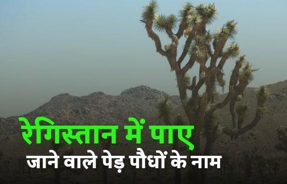 रेगिस्तान में पाए जाने वाले पेड़ पौधों के नाम   Names of trees and plants found in the desert