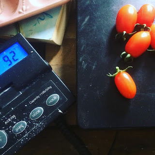 Tomatoes being weighed