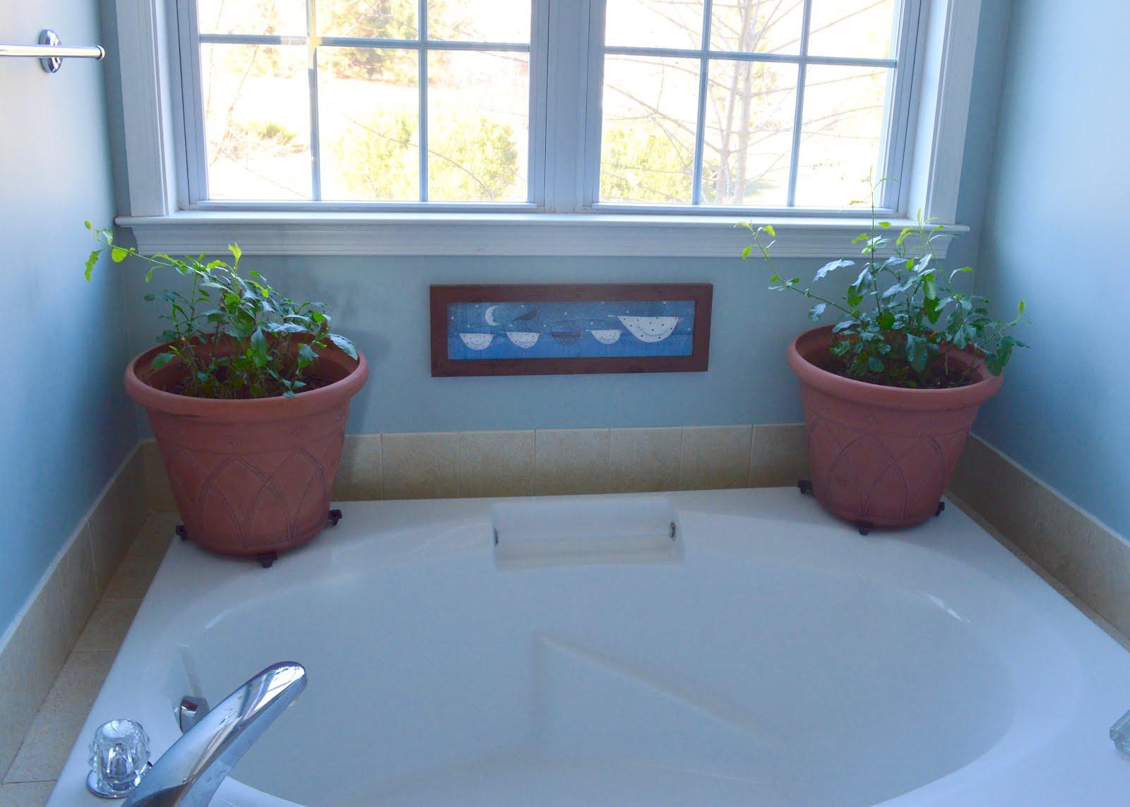 Laurrie\'s Garden Diary : Bathtub Plumbago