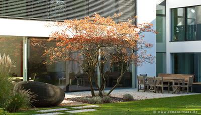 Bepflanzung moderner Garten, Gartendesign, Gartengestaltung München, Gartenplaner München
