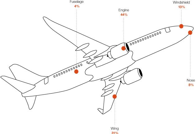 airplane parts and bird strike