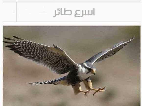 أسرع طائر