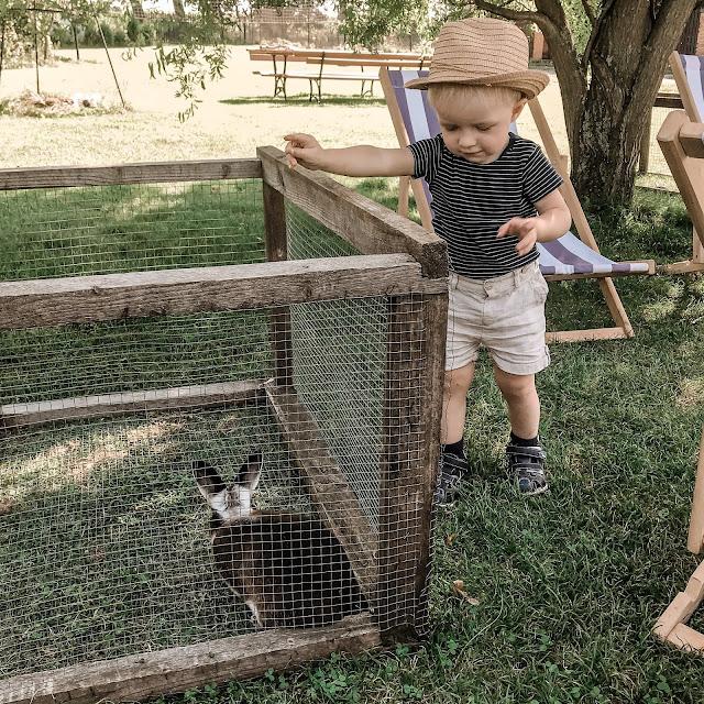 króliki, karmienie zwierząt
