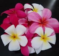 Fragrant plumerias are used for leis - Honolulu, HI