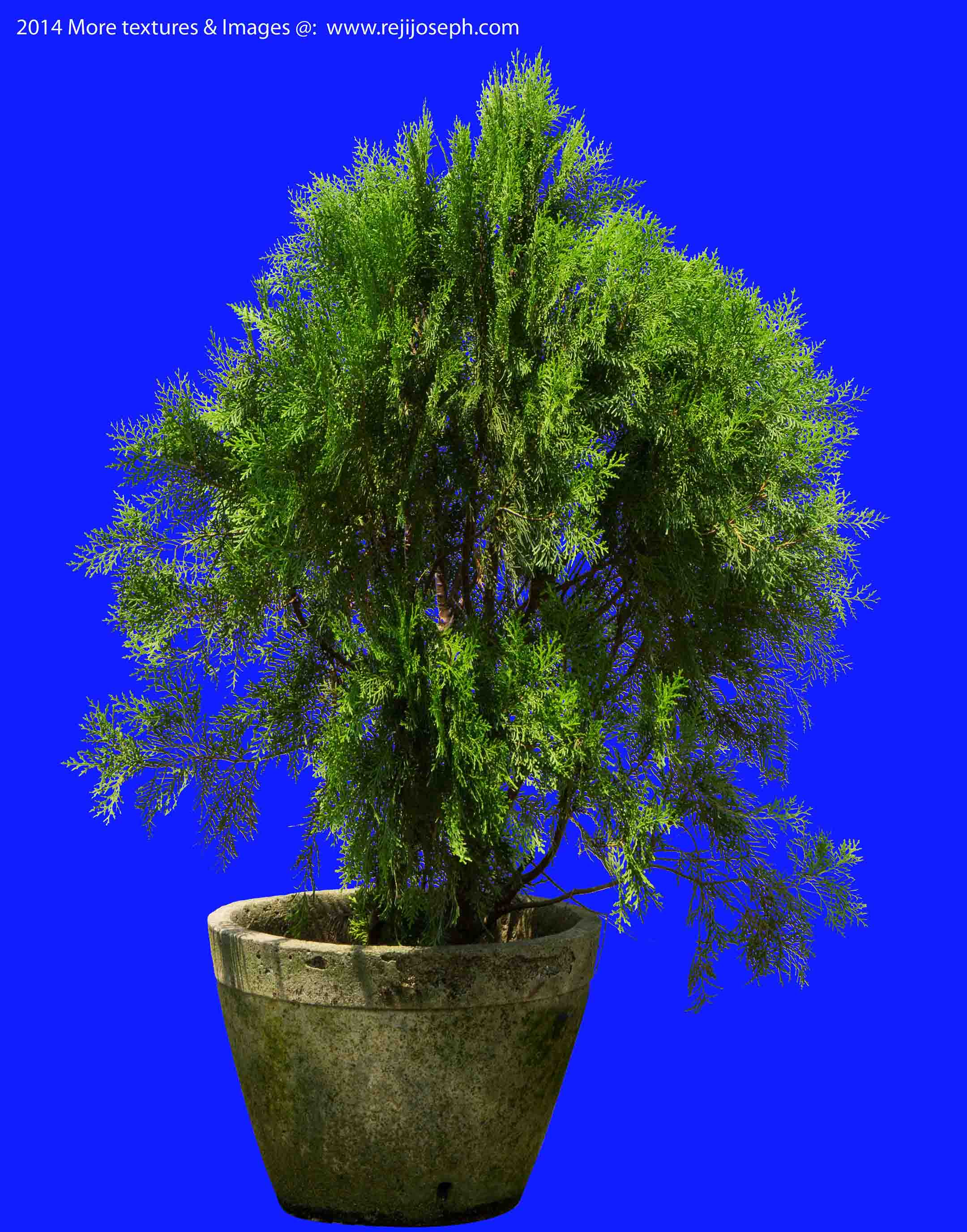 Cypress Garden Plant Texture 00003