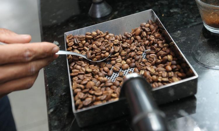 Café do sudoeste recebe R$ 5 milhões em investimentos através do programa Bahia Produtiva