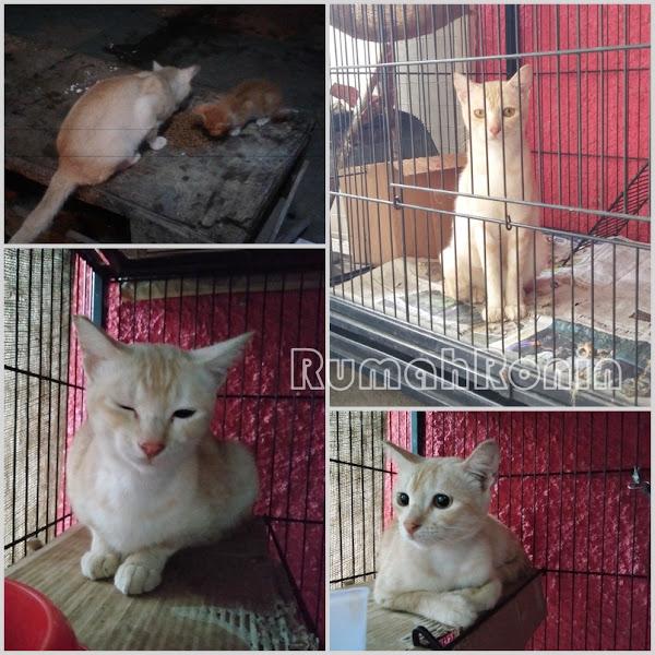TNR dan Upaya Mencegah Over Populasi Kucing Liar