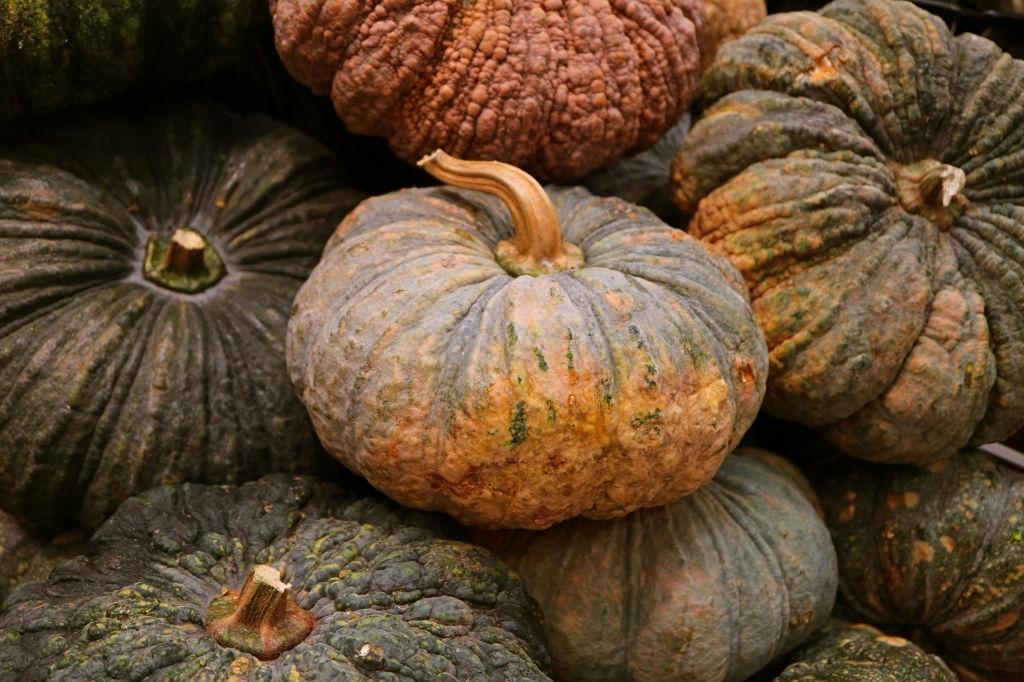 Prepare For A Bumper Harvest!