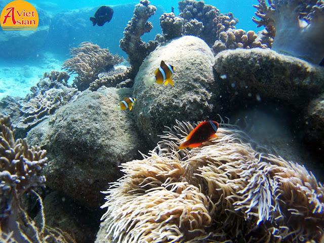 Tour Đi Bộ Dưới Biển 1
