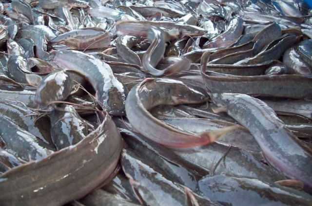 Starting a Fish Farm Business in Nigeria