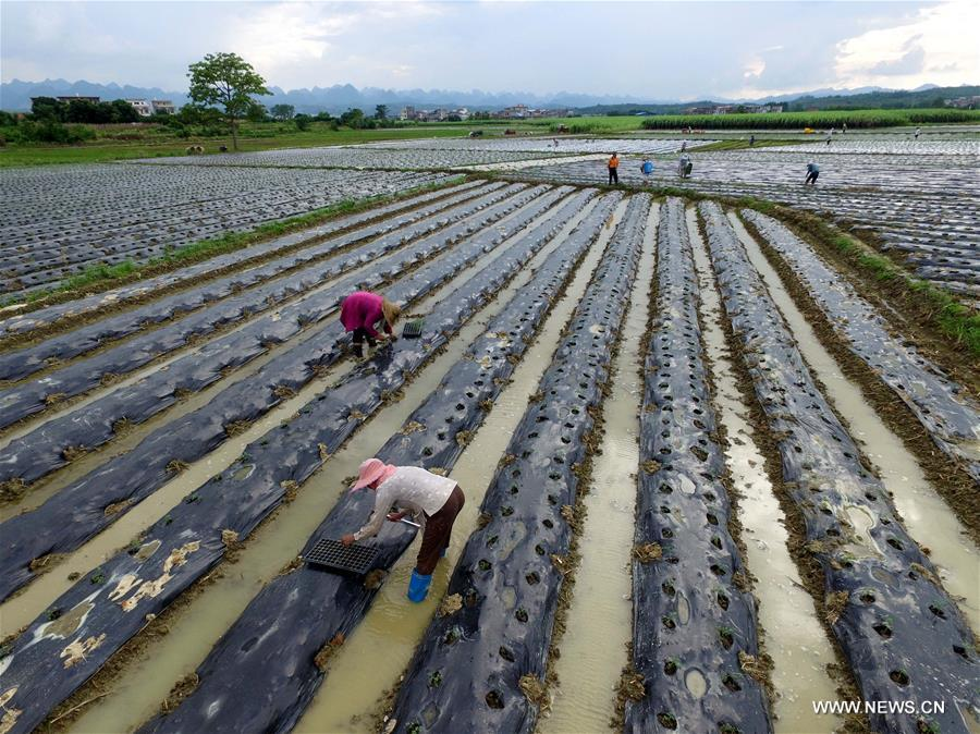 Farmers Busy With Sowing After Liqiu China Beverage News