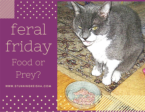 Feral Friday—Food or Prey?