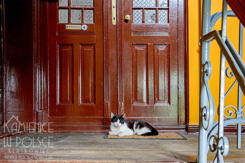 Toruń: kot - opiekun domu
