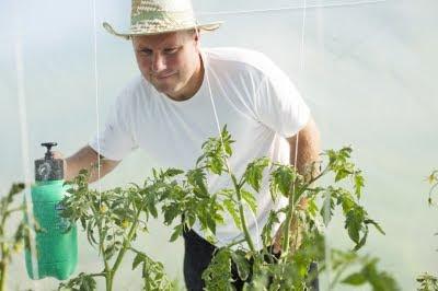 hombre-roseando-plantas