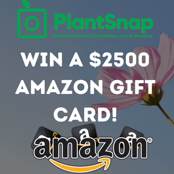 $2500 Amazon Gift Card Giveaway (From PlantSnap 🌴)