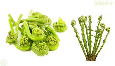 Fiddlehead fern greens,ঢেঁকি শাক, ঢেকিয়া শাক