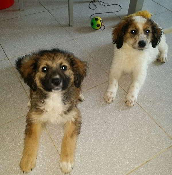 cachorras de tamaño mediano