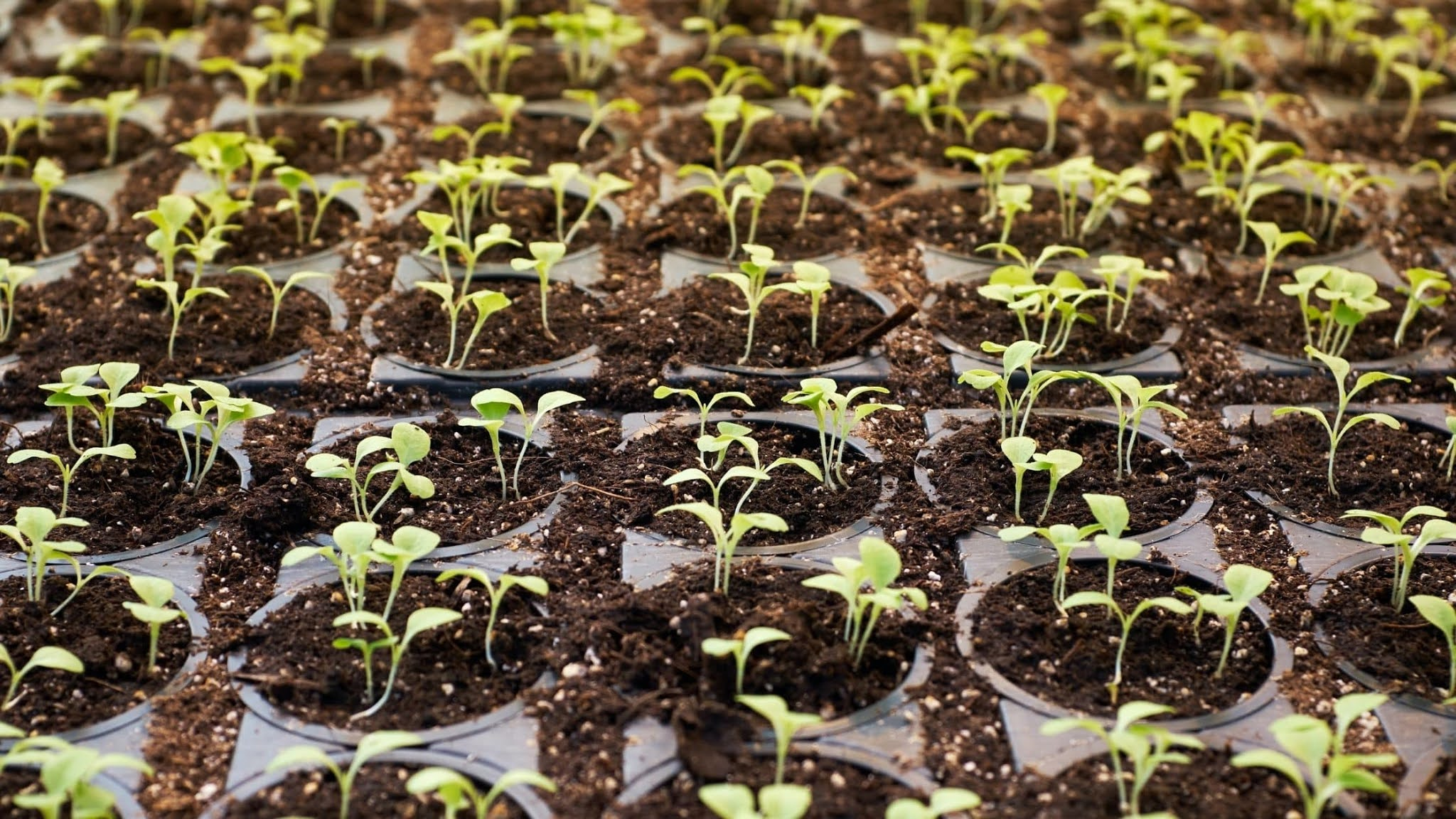 Disadvantages of hydroponics: A Researchers Global Report Conclusion