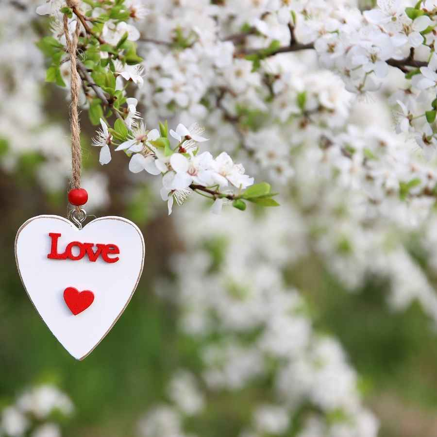 l love you images download