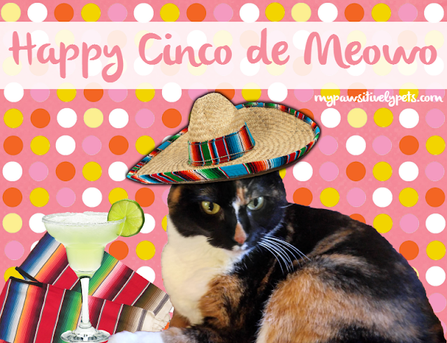 Happy Cinco de Meowo | Pawsitively Pets