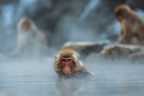 El sesgo de investigación puede dejar a algunos primates en riesgo