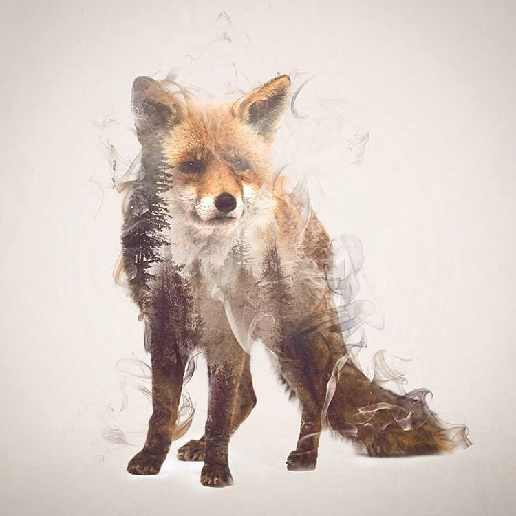 10-Fox-Daniel-Taylor-Ghostly-Animals-in-Manipulated-Photographs-www-designstack-co