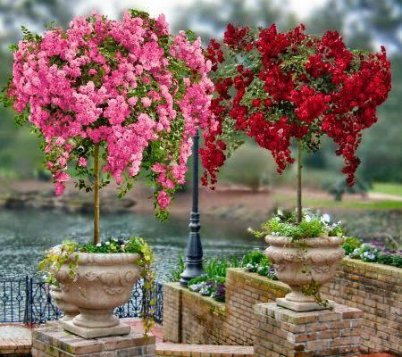 Cvetni kutak Fortuna - Cveće, ideje za uređenje dvorišta, preporuke pri kupovini cveća i još mnogo toga