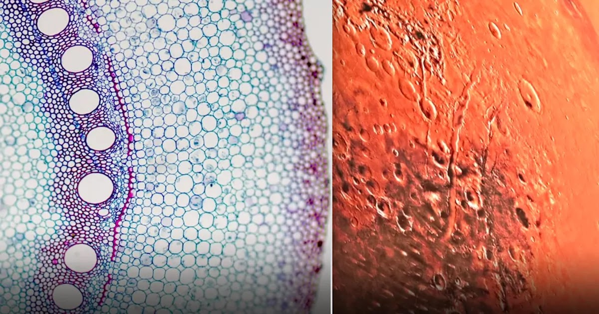 New Findings Of Water Bodies Under The Surface Of Mars Suggest Possibility Of Alien Life