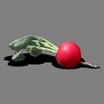 radish in spanish