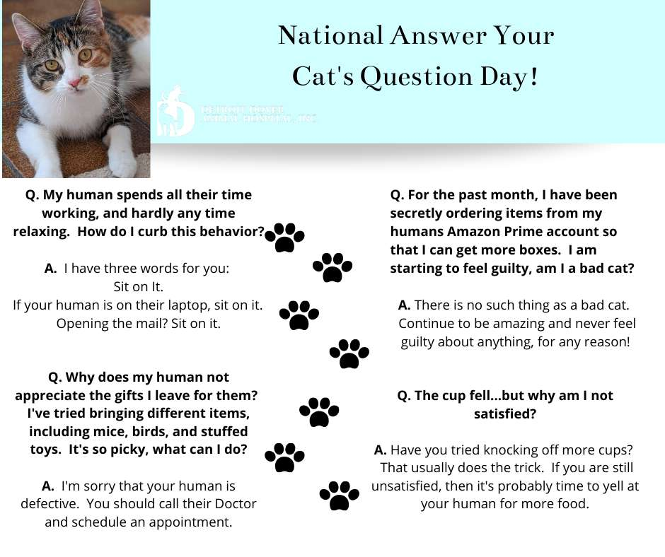National Answer Your Cat's Questions Day Wishes Lovely Pics