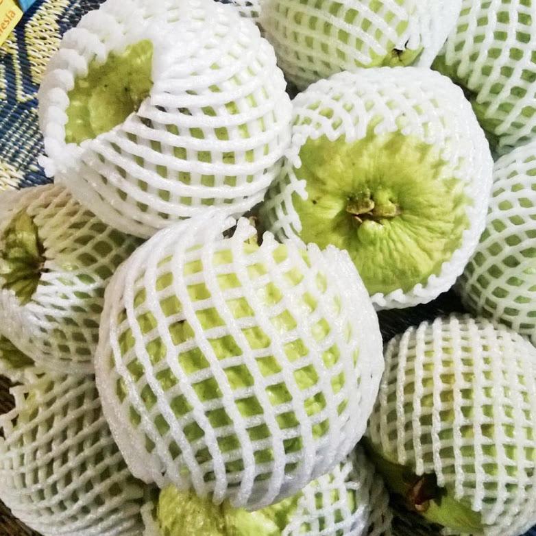 Bibit Tanaman Buah Jambu Kristal cangkok berbuah dan berbunga Bangka Belitung