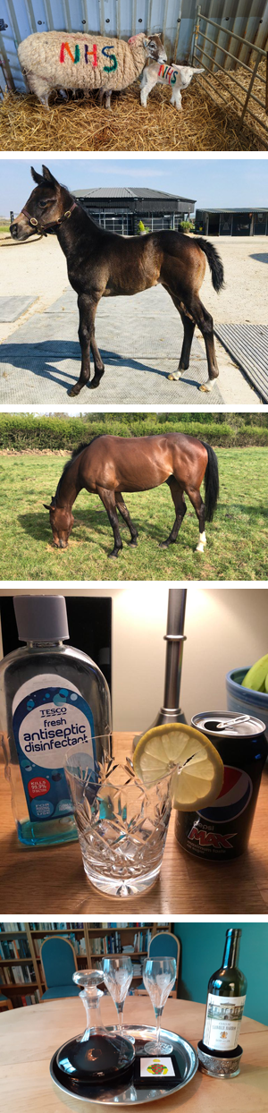NHS rainbow sheep, Mayfair Rock's filly foal, Luttrell Lad loving his grub, A new form of G&T, Life's too short for bad wine