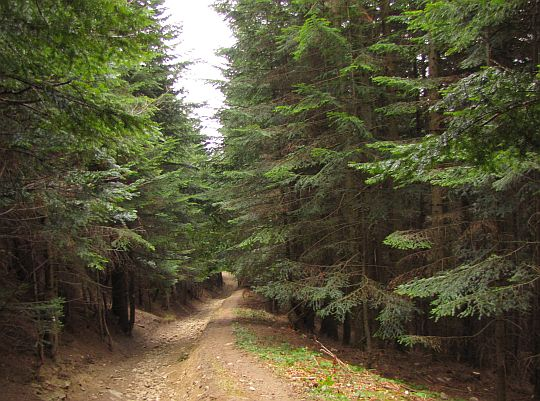 Leśny szlak przez Zembalową.