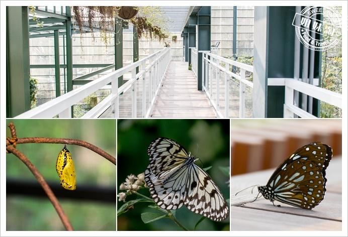金獅湖蝴蝶園