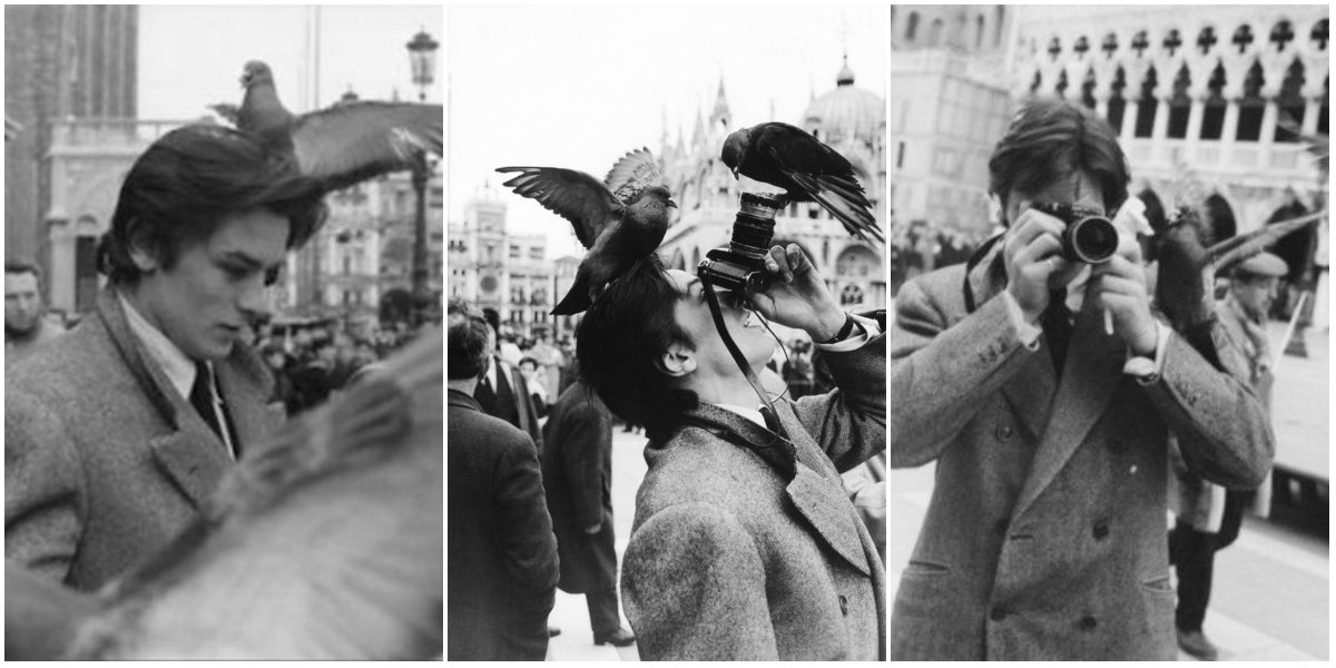 Candid Photographs of Alain Delon Encountered Some Pigeons in Piazza San Marco, Venice, 1962