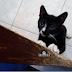 Cara mencegah kebiasaan kucing menggaruk perabotan dalam rumah