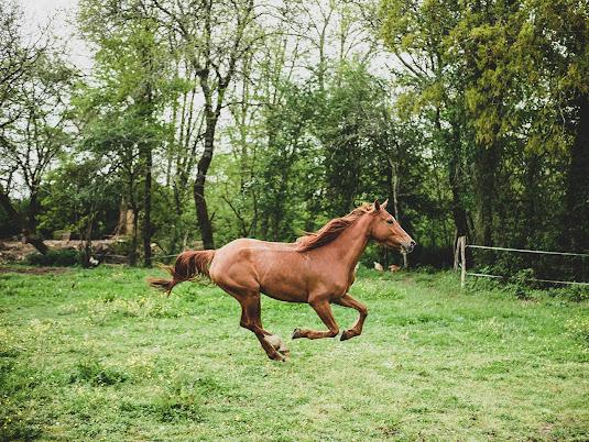 أجمل صور خلفيات خيول 10