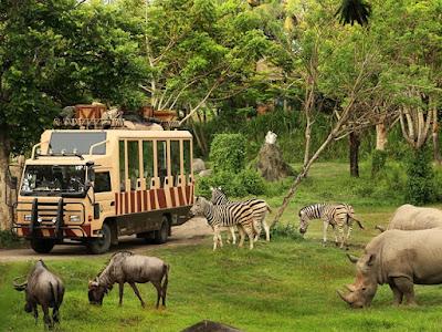 Wisata Safari di Bali | Bali Zoo Park