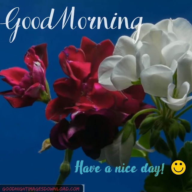 Good Morning Flowers Wishes Images free Download