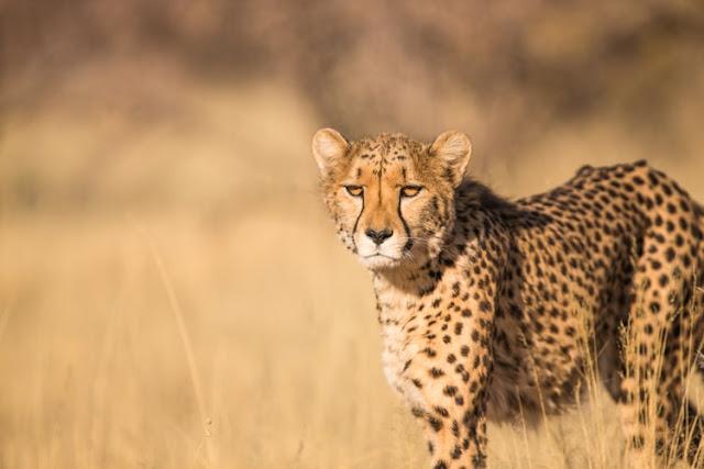siapa hewan tercepat di dunia? - catatanadi.com