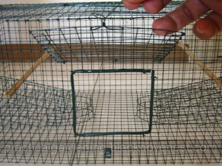 Practical Gardening Homemade Bird Trap Painting The Cage
